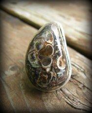 画像1: レア希少ツリテラ瑪瑙リング指輪10号*巻貝化石レアストーン (1)