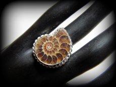 画像3: アンモナイト化石シルバーリング指輪15号*エスニック (3)